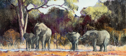 Elephants at Waterhole - Kruger Park | 2019 | Oil on Canvas | 42 x 55 cm