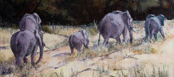 Elephants crossing River bed - Kruger Park | 2019 | Oil on Canvas | 45 x 75 cm