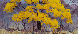 Cassia Abbreviata 1, Kruger Park | 2019 | Oil on Canvas | 40 x 54 cm