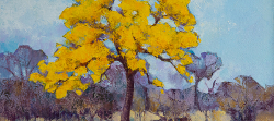 Cassia Abbreviata 2, Kruger Park | 2019 | Oil on Canvas | 36 x 51 cm