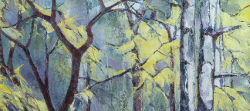 Nature's Stained Glass Window - Silver Birches - Spring | 2013 | Oil on Canvas | 64 x 46 cm