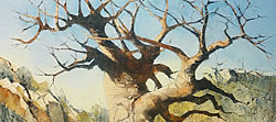 Baobab Study - Mapungubwe Game Reserve | 2013 | Oil on Canvas | 40 x 55 cm
