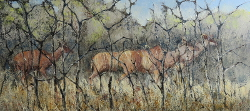 Kudu - Kruger Park | 2019 | Oil on Canvas | 38 X 70 cm